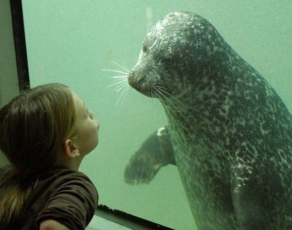 hunstsman-fundy-discovery-museum-our-harbour-seals-will-entertain-you
