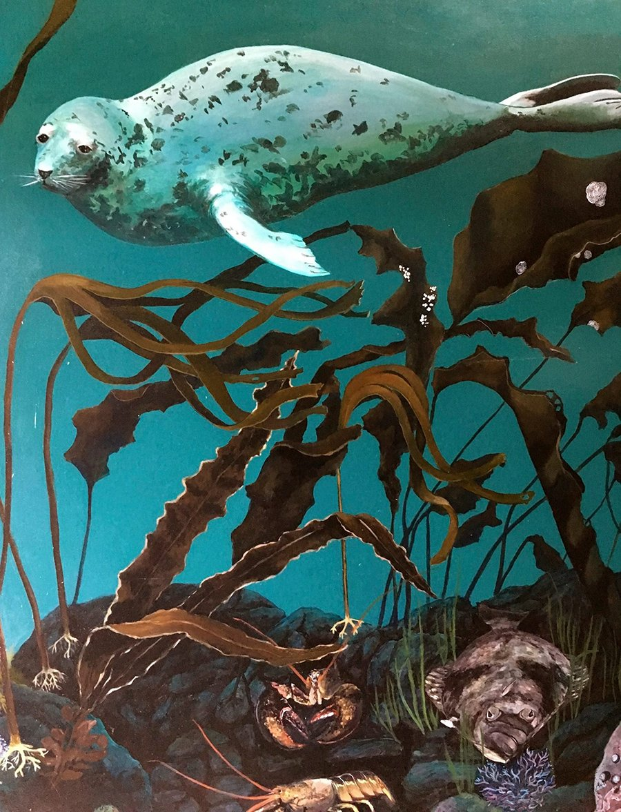 Grand manan museum the creation of the marine mural for Mural work using m seal